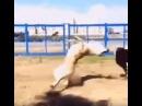 Cachorro capoeirista - Esse manja dos ParanauÊ