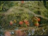 фильм сказка румынии вероника 3 тыс. видео найдено в Яндекс.Видео_0_1426104626134