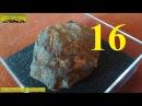 La Scienza di Giacomo - La mia collezione di fossili Geoworld 16 Gli Zoantari [Corallo coloniale]