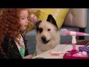 Собака точка ком Сезон 2 Серия 8