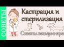 Кастрация и стерилизация, советы ветеринара