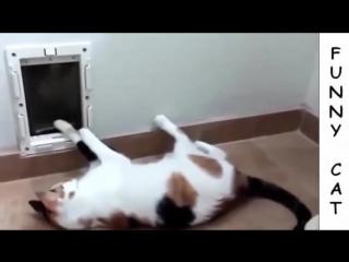 (подборка 2015) приколы с кошками # 2