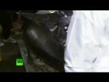 Гигантский тунец ушел с молотка на японском аукционе