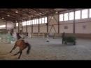 Лошадь, которая очень хотела победить... даже без всадника )))