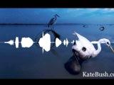 Kate Bush - Aerial A(n Endless) Sky Of Honey