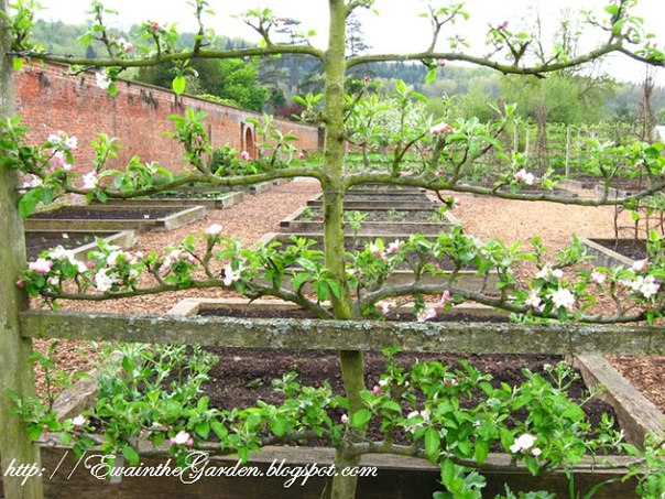 Сад и огород не как у всех интересные идеи