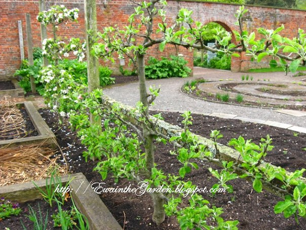 Геометрия в саду и огороде или идеи от английского садоводства