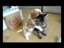 Смешное Видео Про Животных_ Прикольные Коты