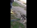 нападение собаки на качели