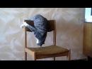 Кот акробат, кот ямакаси, кот выделывает, кот взбесился, бешеный