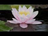 Звуки природы. Релакс медитация. Sounds of nature. RELAX is meditation.