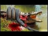 Giant anaconda attacks human - Giant Anaconda - Most Amazing Wild Animals Attacks 2016 #1