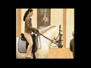 Elegant Dressage Training DVD 1 Englisch by Anja Beran