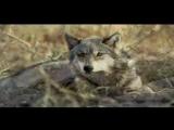 Волчья доля - Аскер Седой