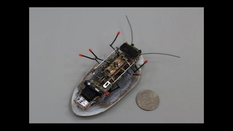 Робот разведчик в виде таракана создан в Калининграде