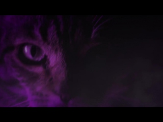 Meow Mix Song _ EDM Cat Remix by Ashworth