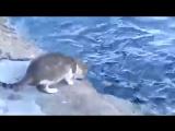 Кот ловит рыбу