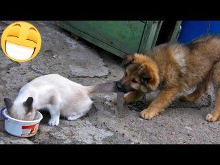 ЖИВОТНЫЕ И БОРЬБА ЗА МИСКУ!  Приколы с животными коты собаки