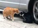 Коты ругаются как люди. Приколы с животными
