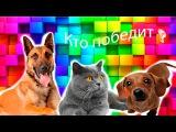 Приколы с Животными,кошки против собак.Приколы 2016, приколы с животными 2016, приколы про животных