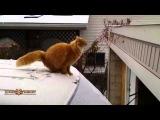 Кошачий конфуз.. Смешные видео про кошек. Летающие кошки