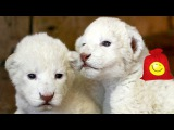 Детёныши зверей, живущих в зоопарке. Забавные животные