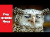 Канал Видео Приколов - Смешные видео про животных до слез Лучшие приколы №7