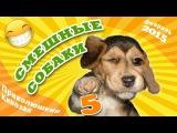 Смешные собаки 5 ? Приколы с животными 2015 ? Funny Dogs · part 5 ? Finny vine compilation 2015