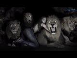 AXEL RUDI PELL-The Curse Of The Damned (HD 1080p - Lyrics)