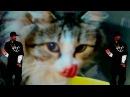 Кошка Rayc против огурца Скажем Нет стереотипам Лучшая кошка в мире