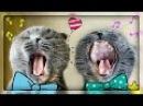 Мяукающие Коты и Говорящие Кошки! Смешные говорящие кошки