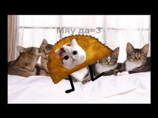 Клип к песни Реп котов