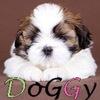 MyDoggy.ru. Собаки: ши-тцу и другие породы