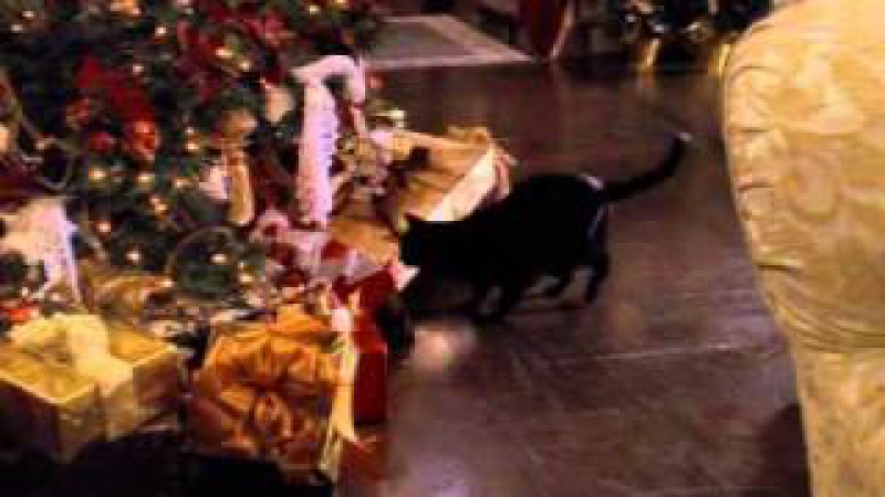Tribute to Salem Saberhagen season 3