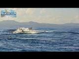 Горбатые киты в Доминикане, залив Самана.mp4