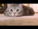 猫バンバン PROJECT MOVIE by NISSAN KnockKnockCats