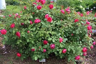 Купить саженци цветы курган, доставка цветов по спб