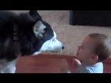 Собака и ребенок разговаривают и понимают друг друга!