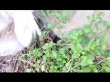 Белла и лягушка. )))