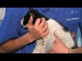 Многодневная операция по спасению кошки - Хиты интернета