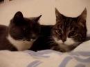 Милые котики 3