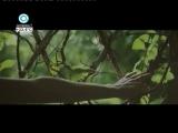 Даша Суворова — Спички (Антенна 7 [Омск])