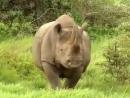 Слоны и Другие Повелители Джунглей. Документальный фильм о животных. дикий мир и поведение животных в нем.