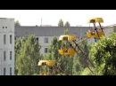 Путешествие по Припяти 5 / Trip in Pripyat 5