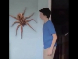when you see spider in home www.funny12videos.com