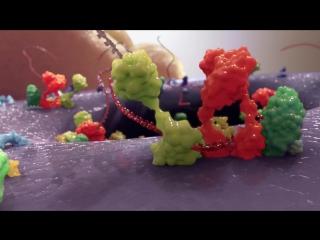 Даклинза ⁄ Даклатасвир побеждает HCV (вирус гепатита С)