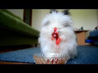 Кровожадный кролик кушает вишню и клубнику
