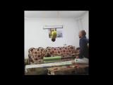 incredible baby Arat hosseini from iran - arat gym