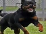 DJ Aligator - woof ....Диджей Аллигатор - собака, заходи к нам....