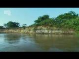 В дебрях Латинской Америки 2012 Пантанал
